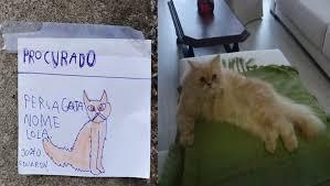 Menino de oito anos faz cartazes à mão para encontrar gata desaparecida