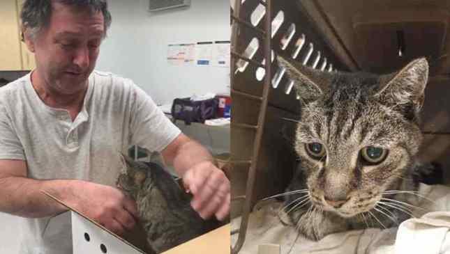 dono reencontra gato após sete anos