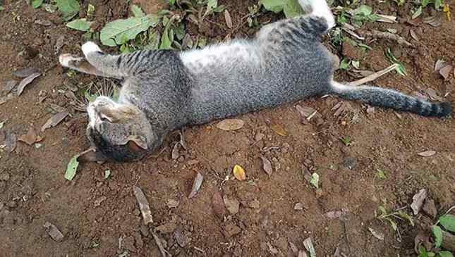 gata mora em túmulo da dona