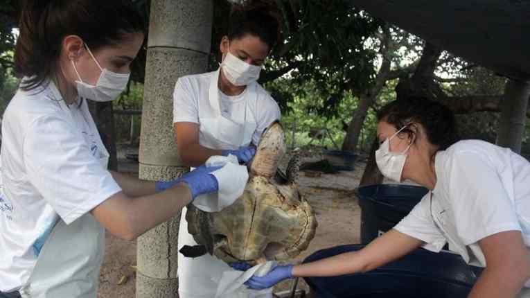 tartarugas morrem devido a óleo