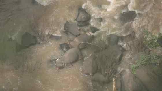 elefantes morreram em cachoeira