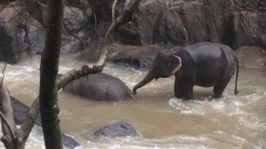 morte de elefantes na Tailândia