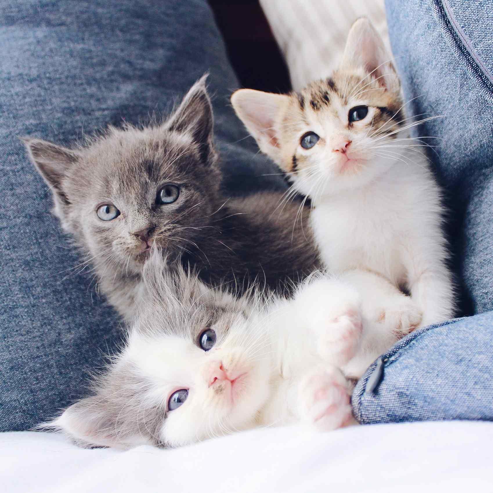 Gatos usados em testes de laboratório