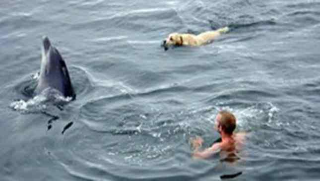 labrador e golfinho