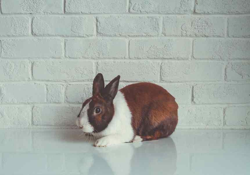 testes de cosméticos em animais avon