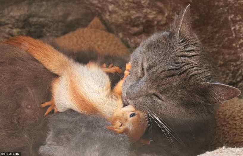 gata amamenta esquilos