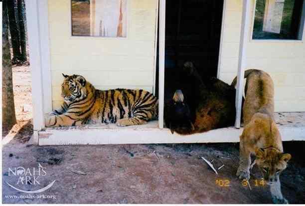 animais ficam amigos