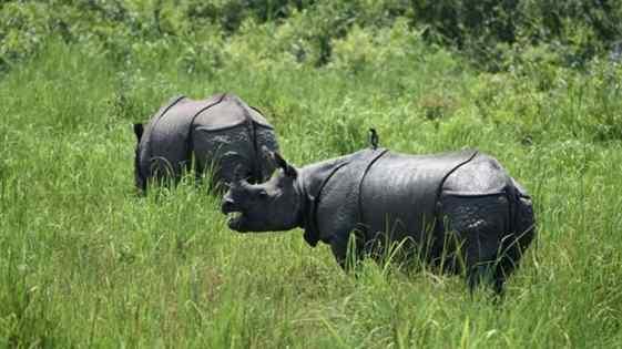 caçadores são mortos para proteger rinocerontes