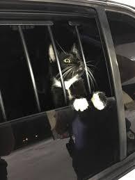 "Gato suspeito de furto foi ""detido"" após denúncia"