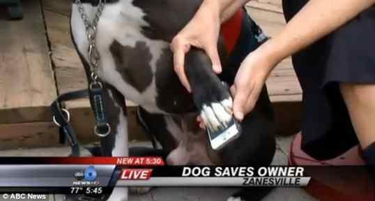 cão salva o dono