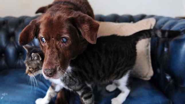 cão e gato amigos