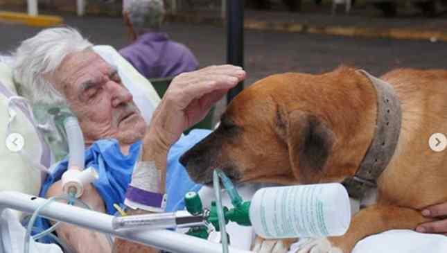 cão visita idos no hospital