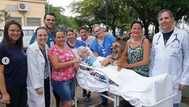cachorro visita dono no hospital após acidente