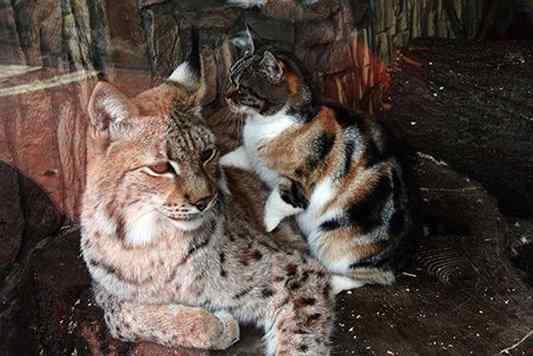 gato invade zoológico
