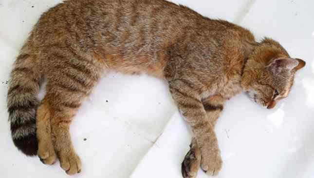 gato misterioso descoberto