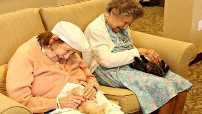 gatos e idosos