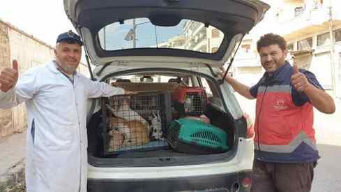 homem resgata gatos em zonas de guerra