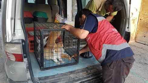 homem resgata gatos na guerra
