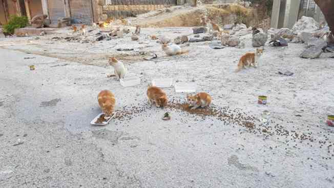 gatos em zonas de guerra