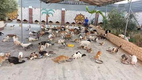 santuário para gatos da guerra