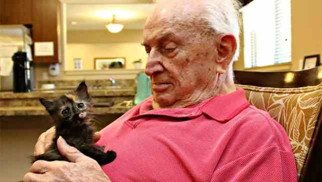 idosos e gatos
