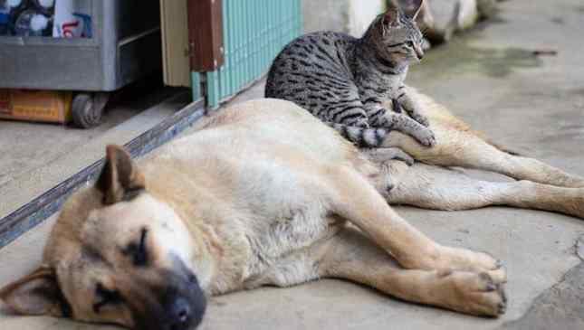 pena para maus-tratos a animais