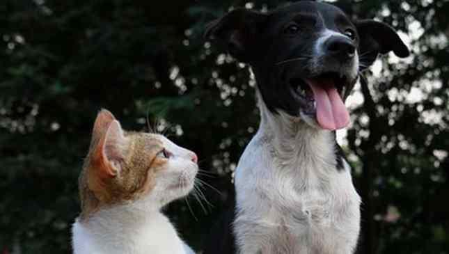 pena para quem maltrata animais