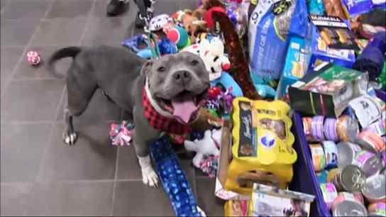 Animais ganham festa de natal