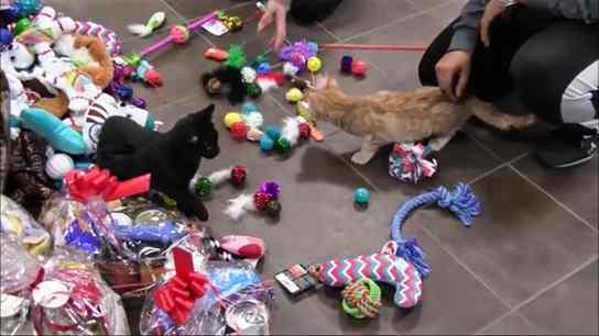 gatos presente de natal
