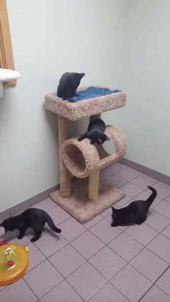 gatos escapam de gaiola