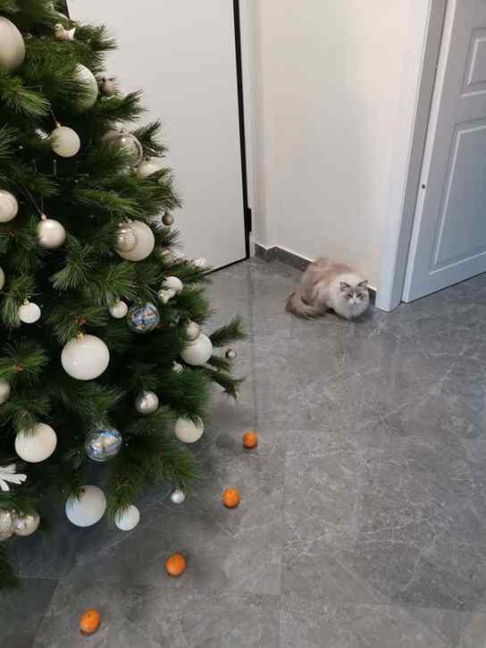 gatos árvore de natal