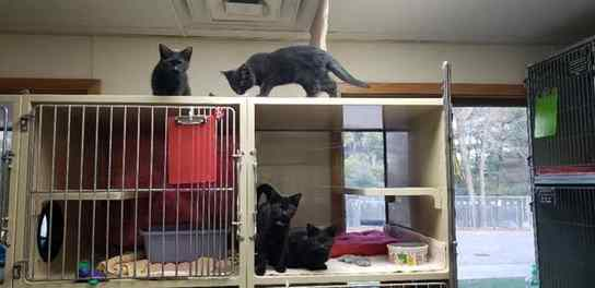 gatos escapam de cela