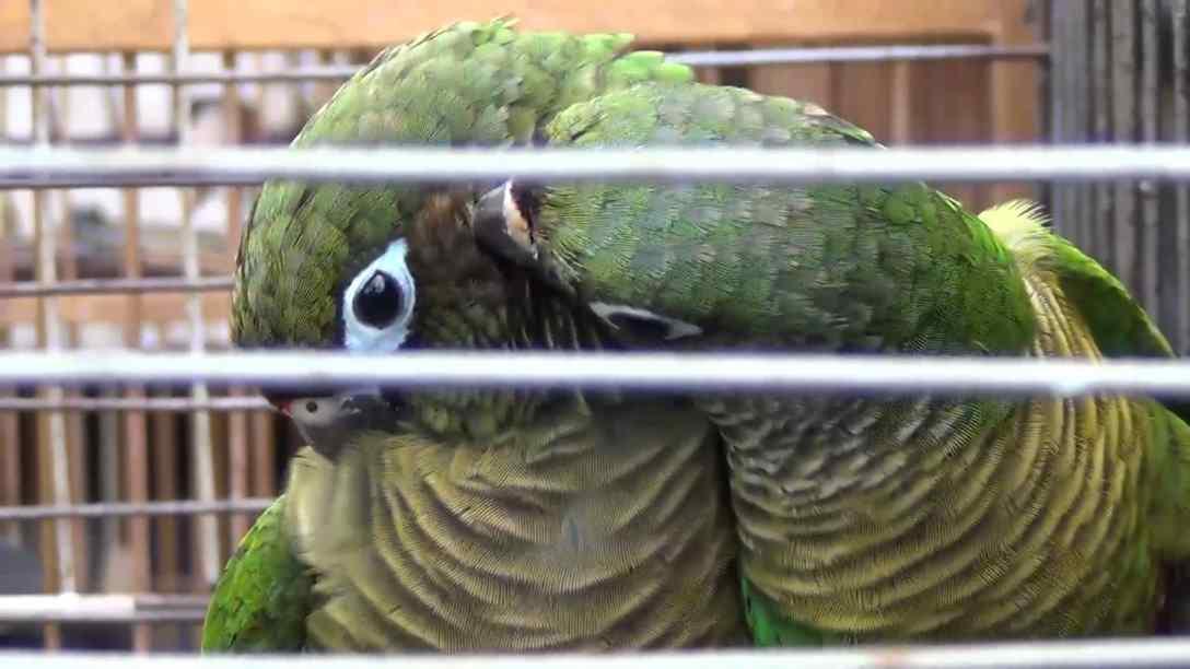 aves resgatadas de casa