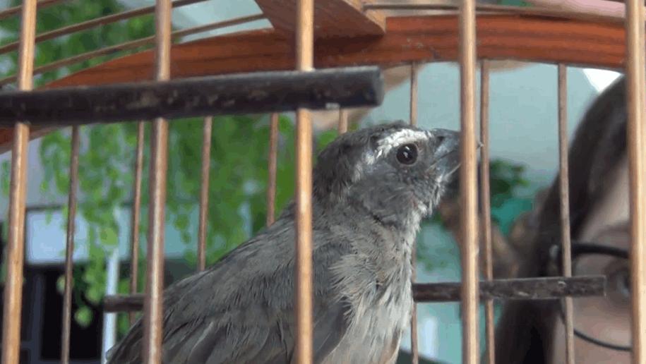 pássaro em situação de maus-tratos