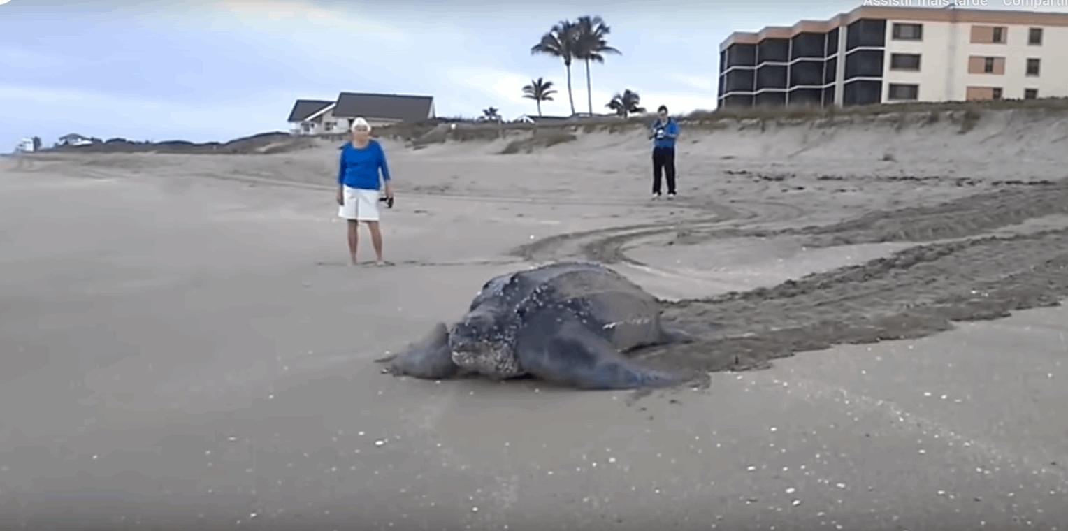 fotos maior tartaruga do mundo