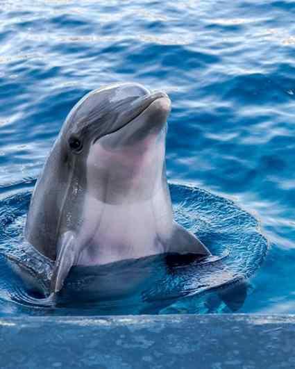 golfinhos em cativeiro