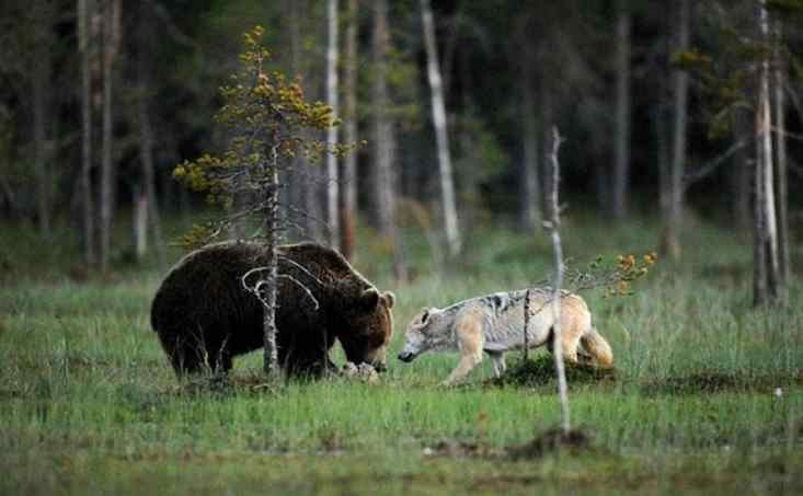 amizade entre animais selvagens