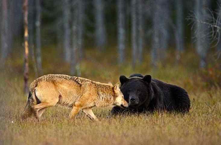 animais fazem amizade na natureza