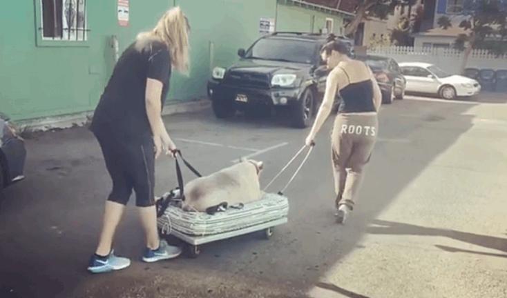 cão obeso foi adotado por famosa