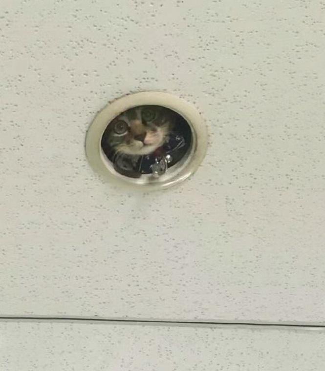 eu acho que vi um gatinho