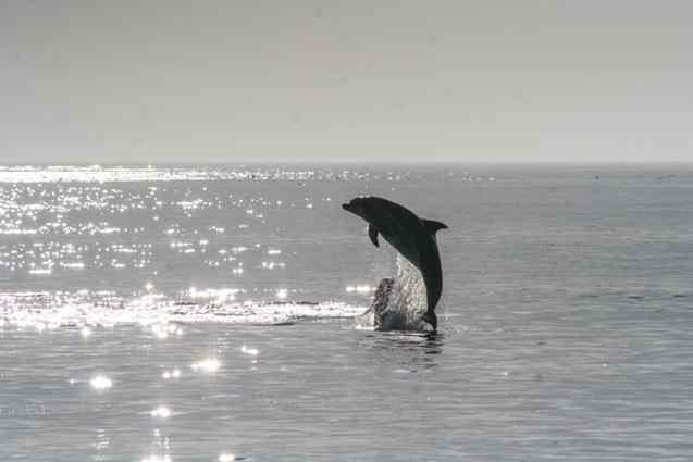 golfinhos e baleiras Canadá