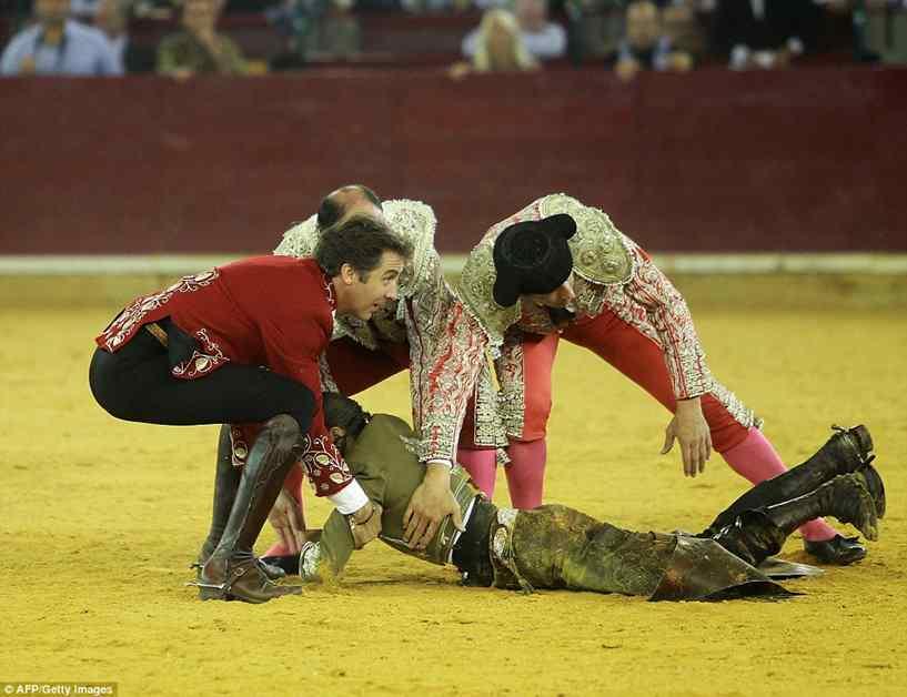 toureira foi atacada por touro