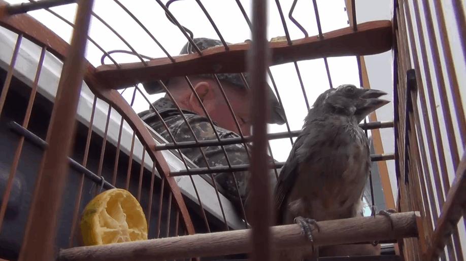 polícia ambiental resgata ave