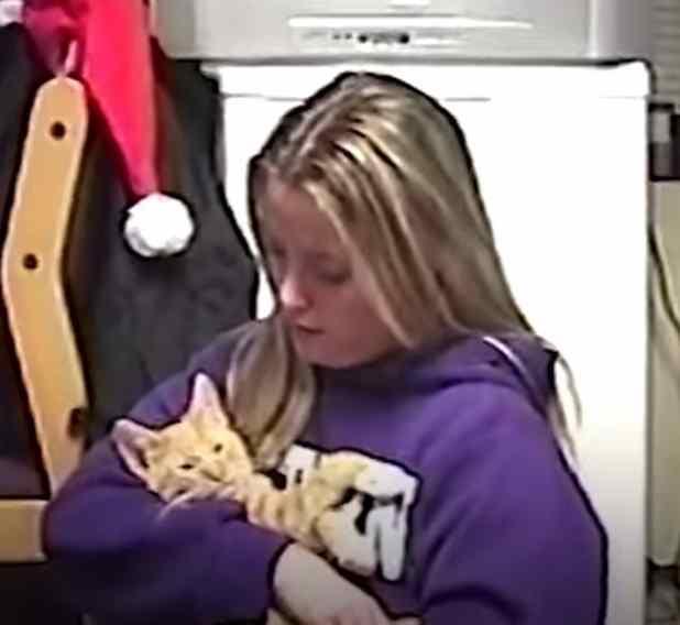 gato idoso se despede da dona