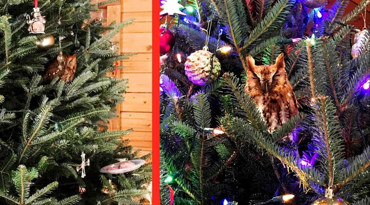coruja escondida de árvore de natal