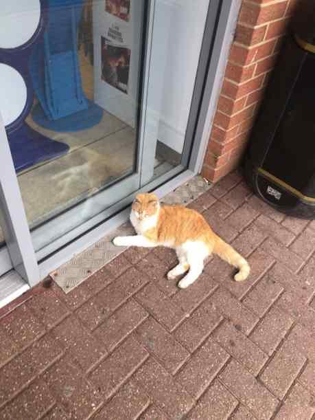 gatinha foi expulsa de loja
