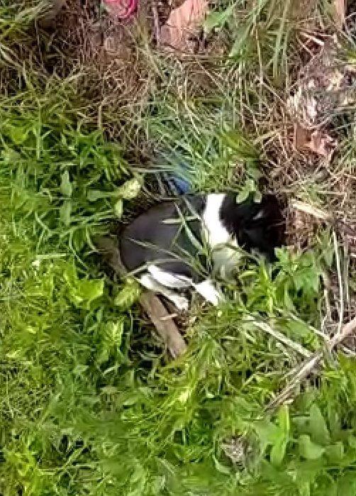 cães e gatos envenenados