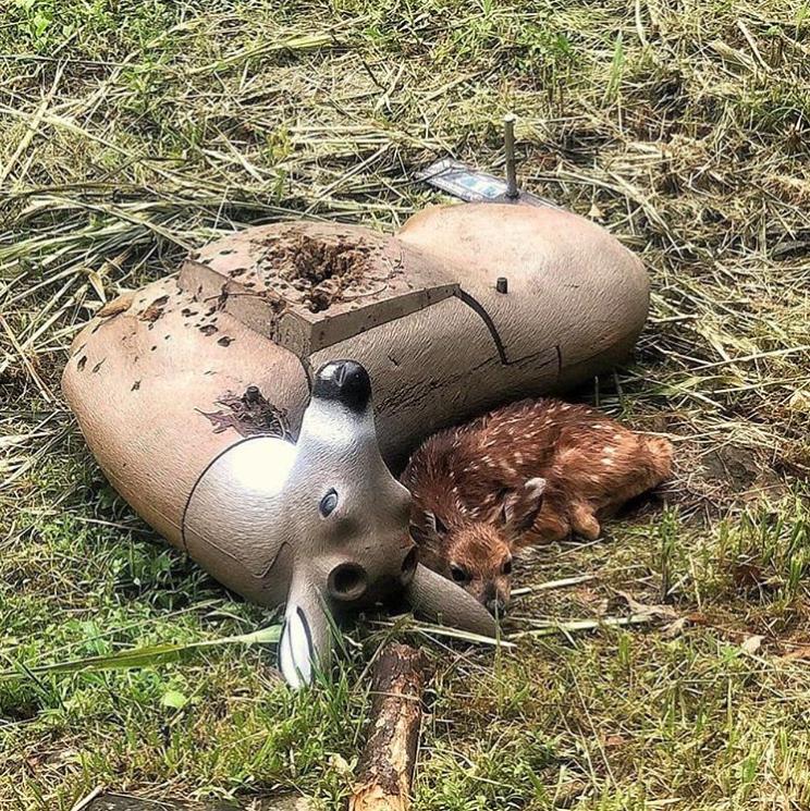 bebê cervo acha que boneco de tiro ao alvo é sua mãe