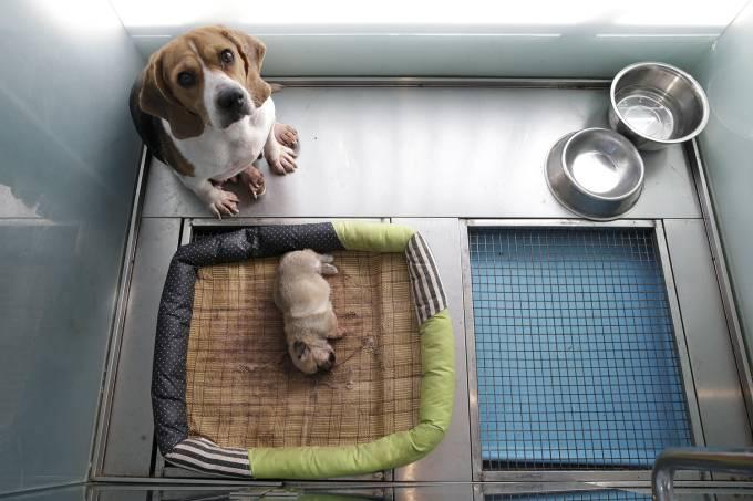 venda de filhote em pet shops