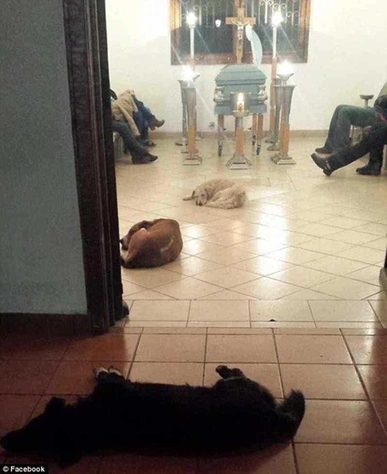 cães em velório